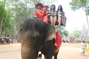 summer IP program students on elephant